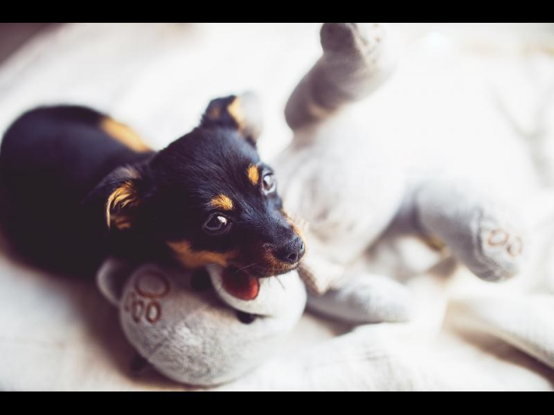 Кучетата биха излъгали, за да получат любимото лакомство