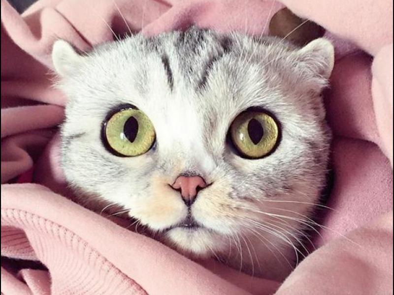 """Котката с огромни очи, която стана звезда в """"Инстаграм"""""""