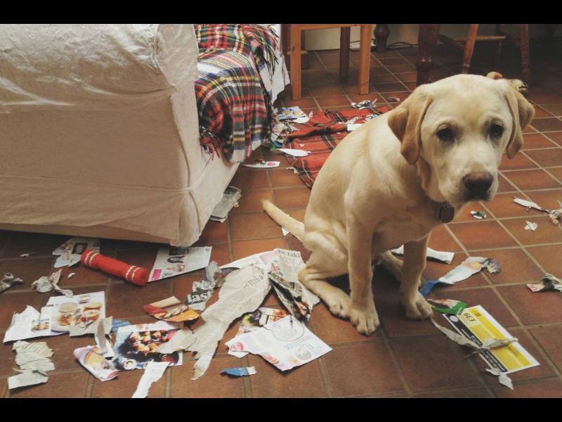 Защо кучетата навеждат засрамено глави?