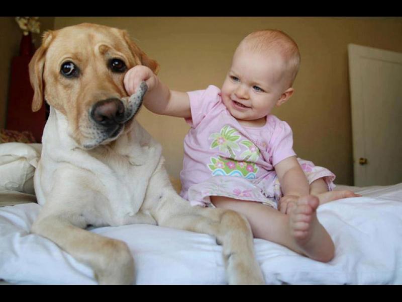 Домашните любимци са полезни за бебето /ВИДЕО/