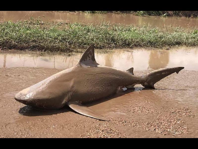След ураганът Деби: Акула на пътя!