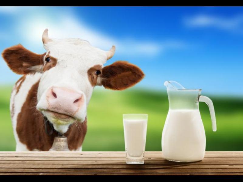 Лишаването от мляко - с фатални последици