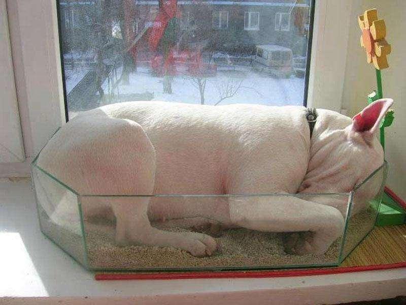 Спящи домашни любимци... на необичайни места /СНИМКИ/ - картинка 1
