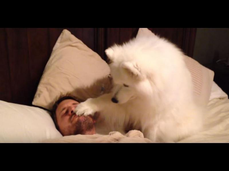 Това куче събужда стопанина си по възможно най-очарователния начин /ВИДЕО/