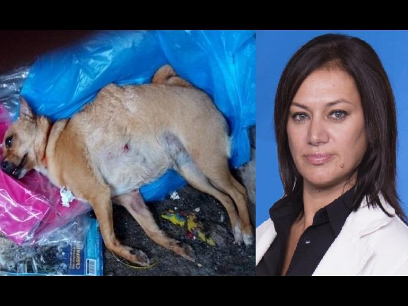 Собственичката на кучетата-убийци не спира да се усмихва... /ВИДЕО+СНИМКИ 18+/