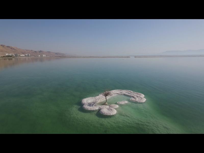 Живо дърво в Мъртво море