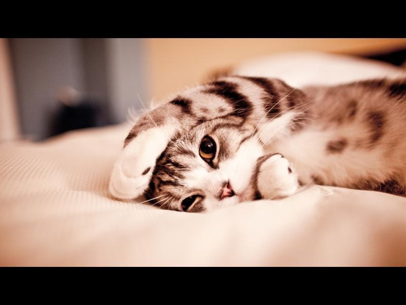 Как котките се превърнаха в домашни любимци?