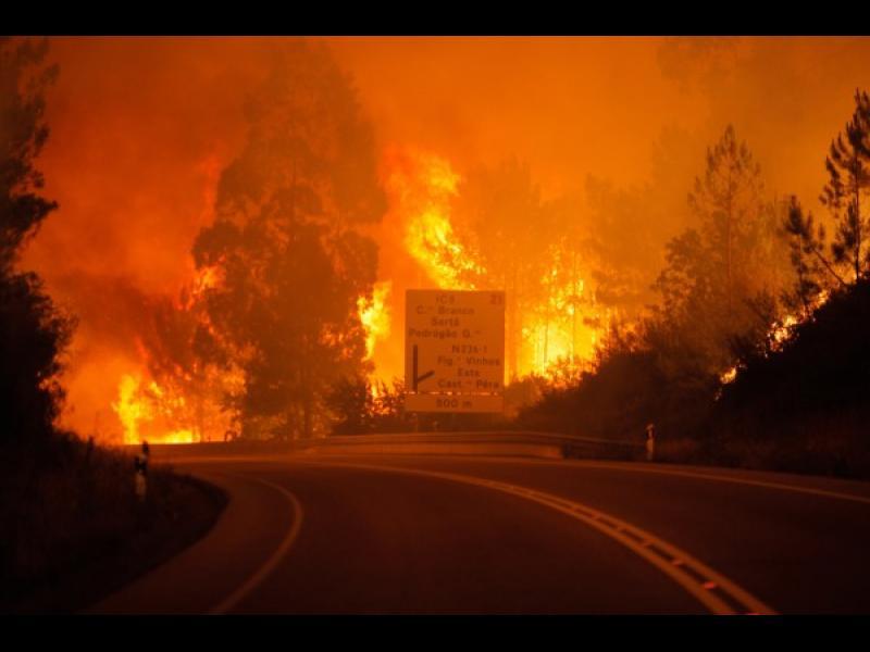 Горски пожар отне живота на 57 души в Португалия