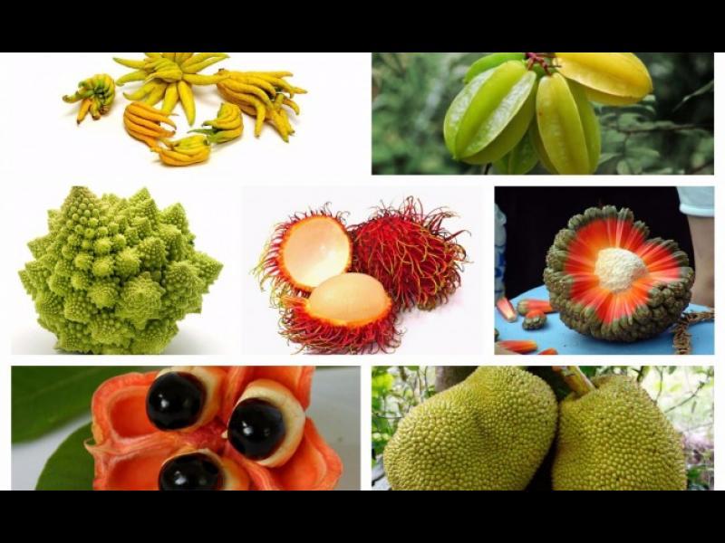 Най-странните плодове и зеленчуци, които можете да опитате по света