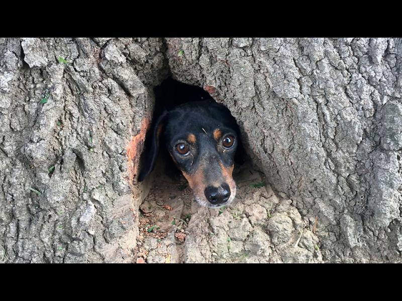 Заклещен в едно дърво