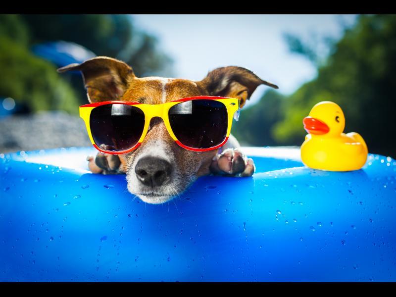 Идеи за безгрижно лято