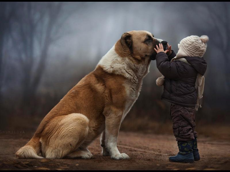 5 житейски урока, които можем да научим от животните