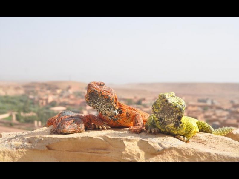 7 причини да отидете в Мароко
