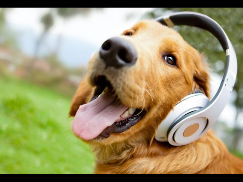 Аудиокниги ще разказват приказки на самотни кучета