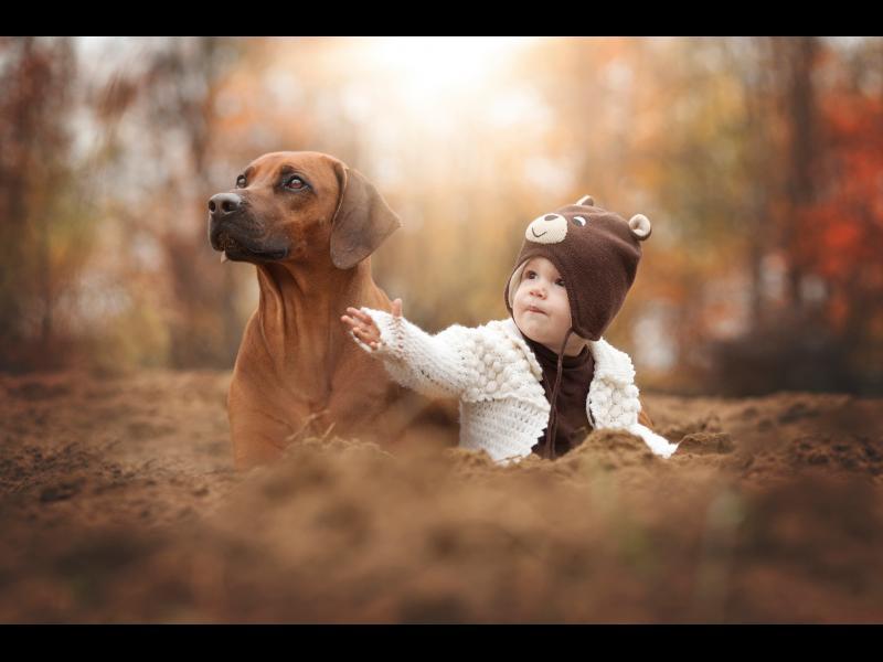 """Горди притежатели на екземпляр от вида """"дете"""", пиша в качеството си на притежател на екземпляр от вида """"куче"""""""