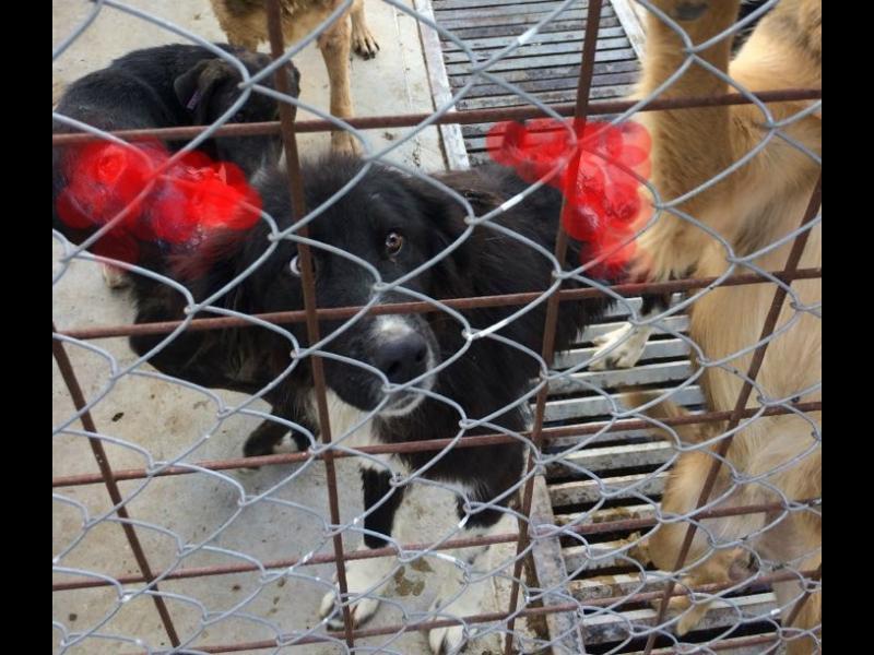 Приютът в Горни Богров - трупове, разкъсани кучета и безброй нарушения /СНИМКИ 18+/