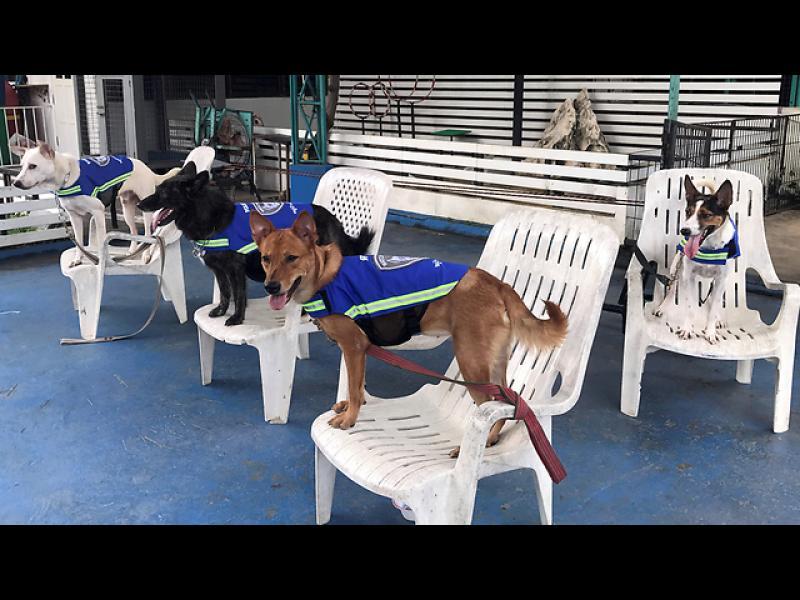 """""""Умни жилетки"""" превръщат бездомни кучета в пазители на квартала"""