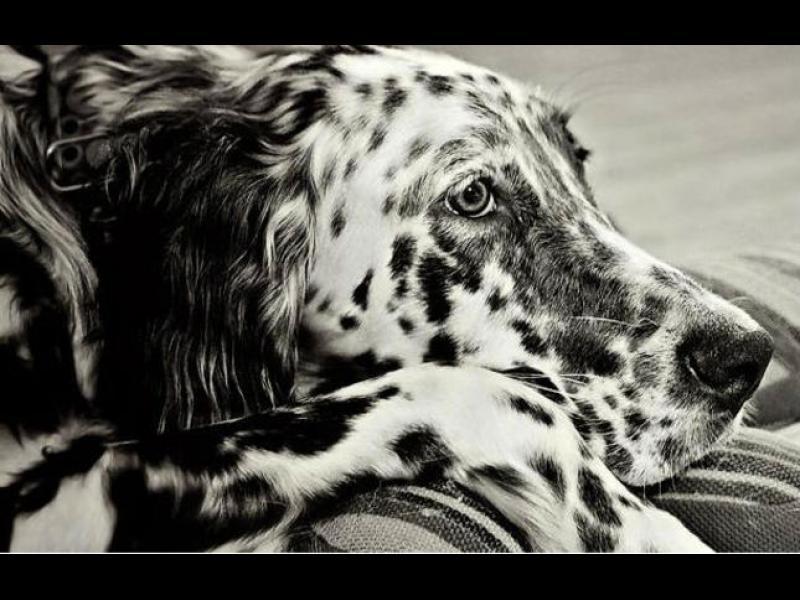 25 снимки на кучета, които ще ви развълнуват