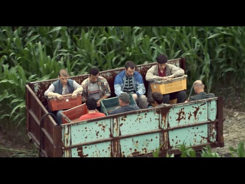 Полиция спаси българи от робски труд в британска ферма