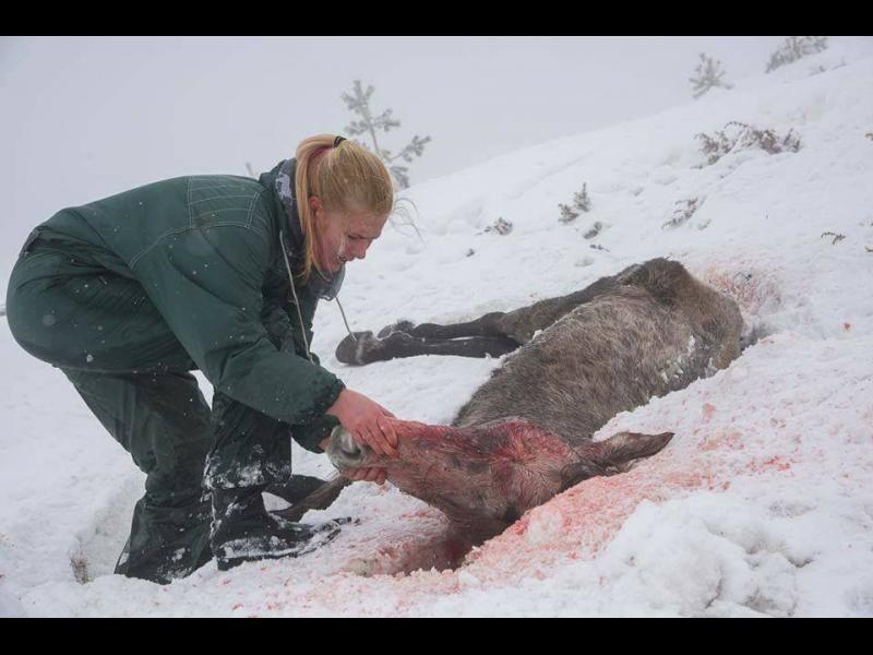Кой е виновен за смъртта на десетки коне в Осоговската планина?