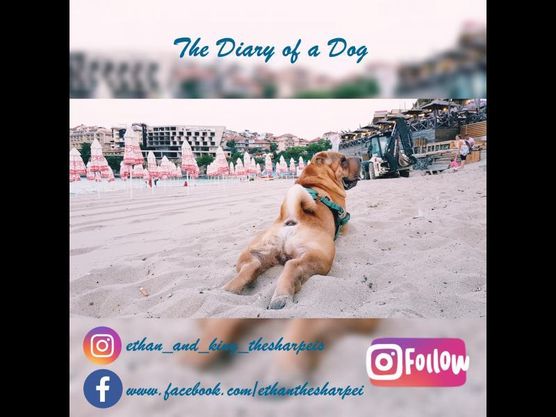 The Diary of a Dog: Правилник за пълноценно съжителство с човешки индивиди /Трета глава/