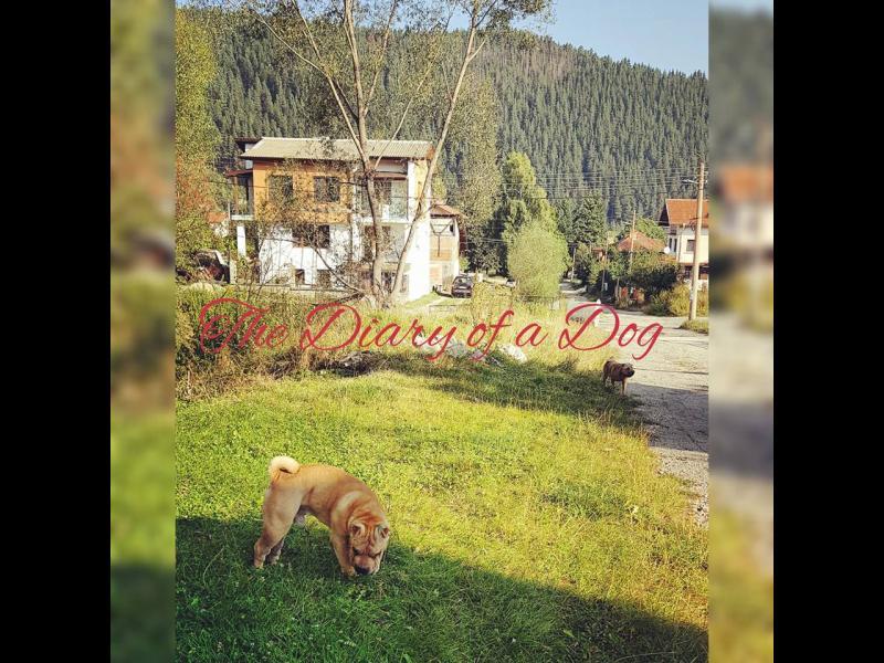 Дневникът на едно куче: Идем, Говедарци, идем