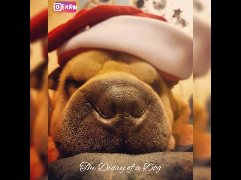 Из Дневникът на едно куче: Как да оцелееш на Коледа?