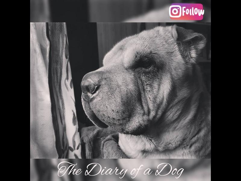 За кучешките странности искрено и лично (без Миглена Ангелова)