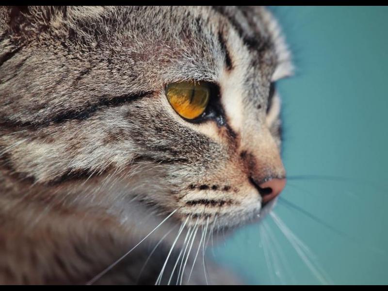 Малта – островът на котките