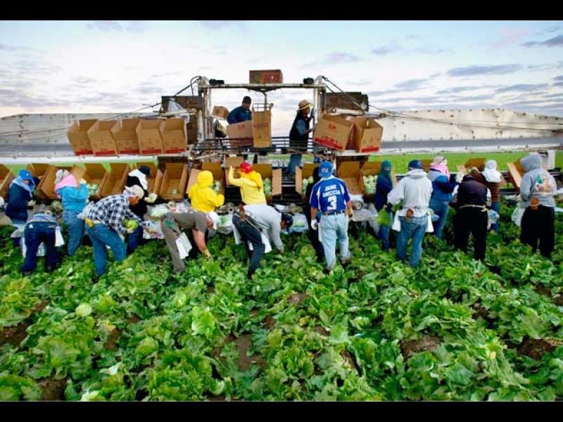 ЕК настоява да има свободно движение на сезонни работници