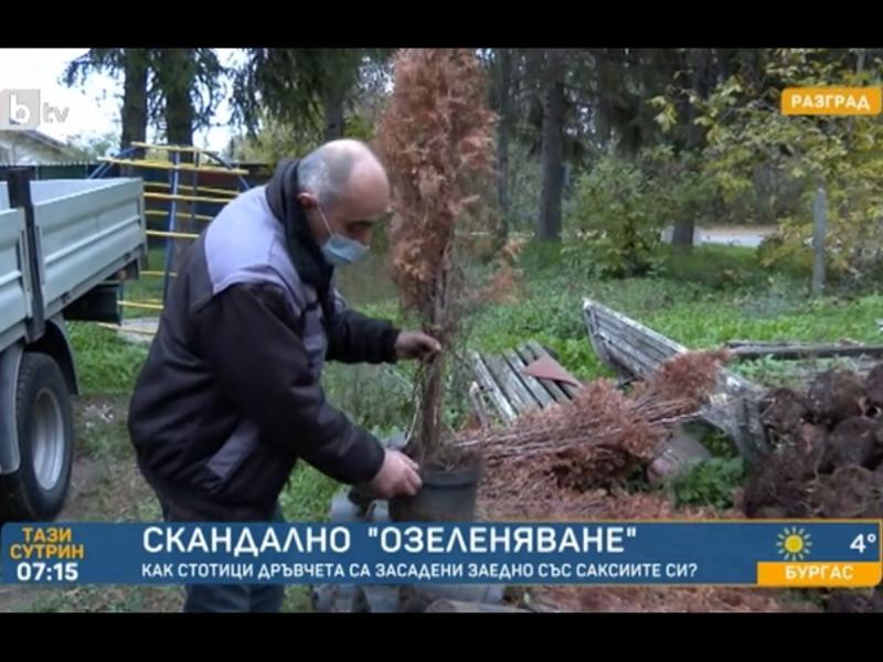 Озелениха Разград, без да извадят дръвчетата от саксиите