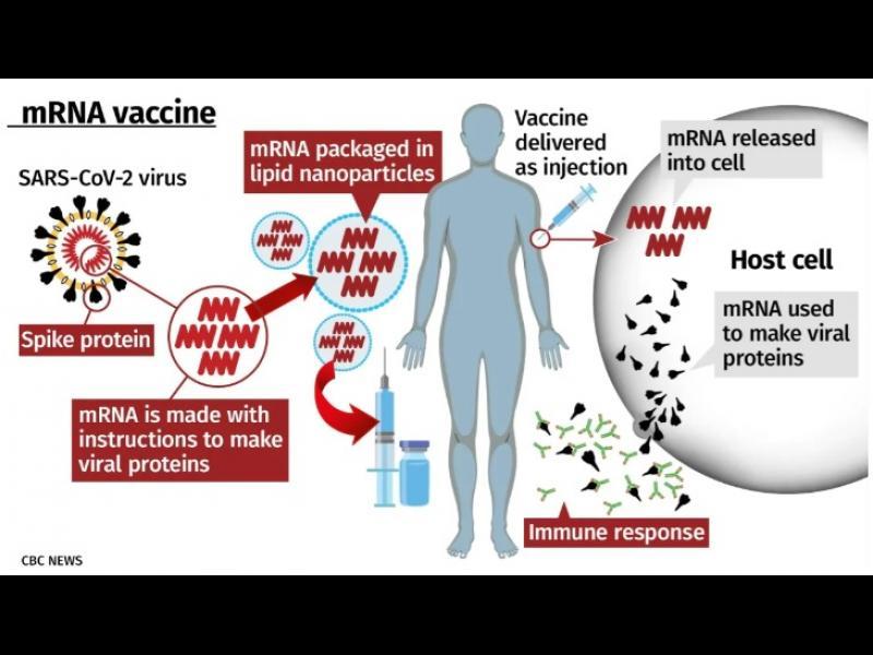 Какво е mRNA ваксина и защо тя идва първа?